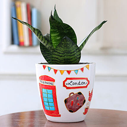 Green Sansevieria Plant in London Ceramic Planter