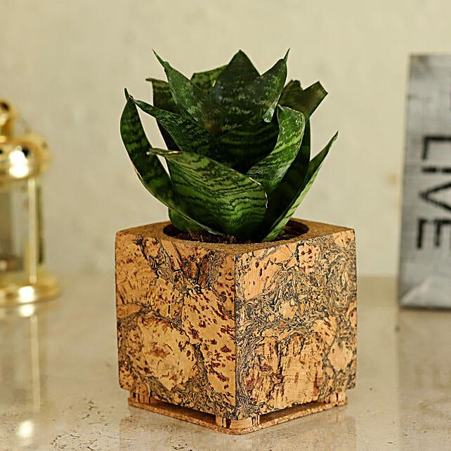 Plant In Trendy Cork Pot