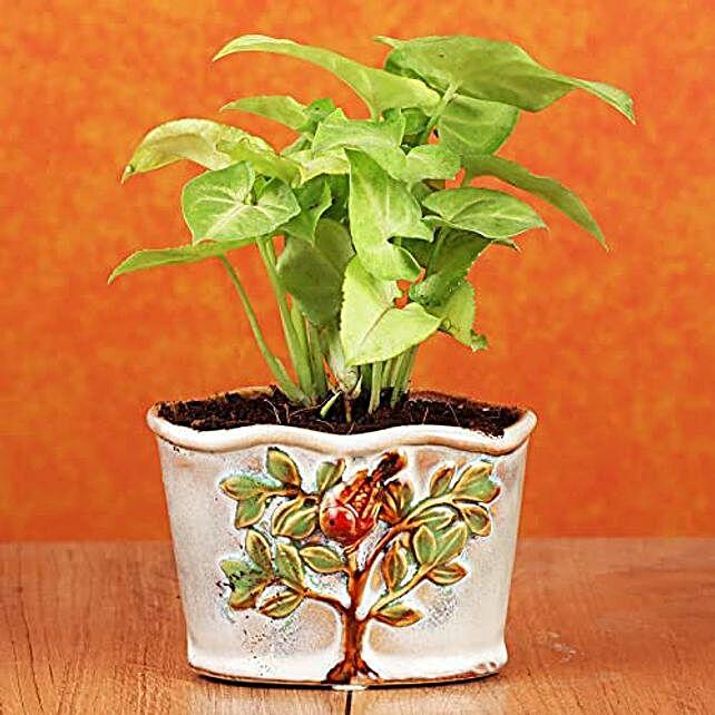 vastu plant online