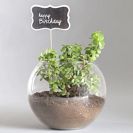 Happy Birthday Jade Plant Terrarium:Terrariums Plants