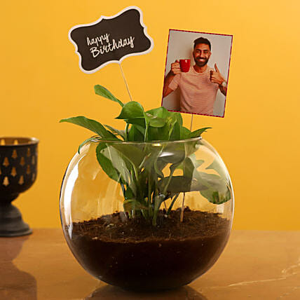 Buy Birthday Personalised Money Plant Terrarium