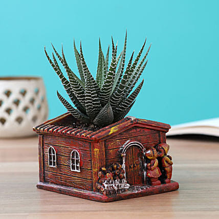 plant in home shape pot