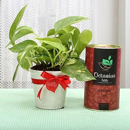 A gift hamper containing a money plant in a pot, heart shaped i love you tag, octavius assam tea