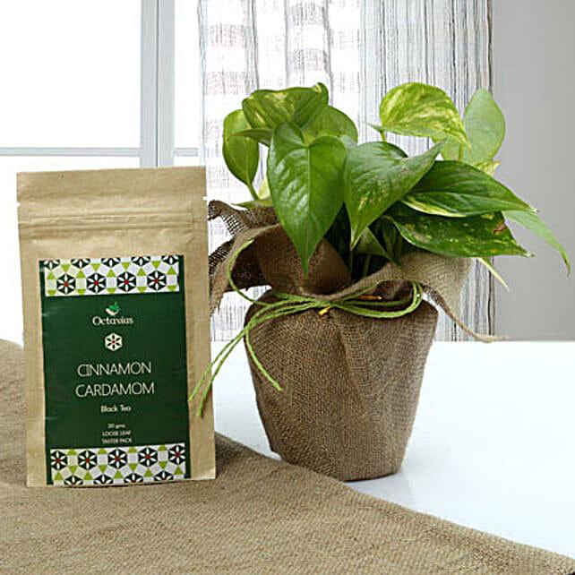 A gift containg money plant in pot, natural jute, green raffia, octavius cinnamon cardamom black tea