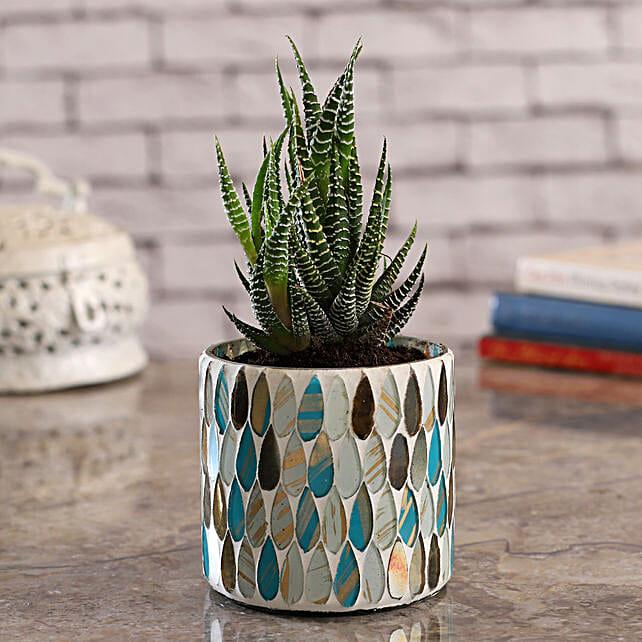 Howarthia Plant In Teardrop Mosaic Vase:Housewarming Gift Ideas