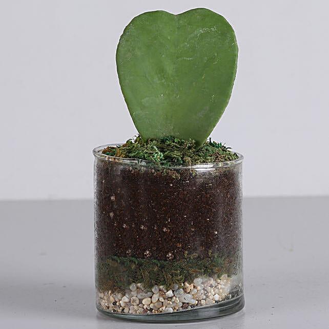 plant in glass terrarium