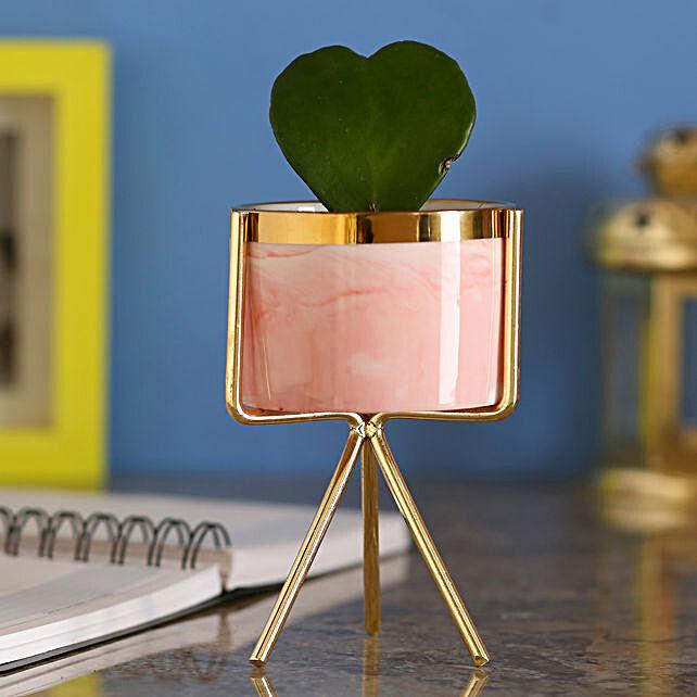 Hoya Plant In Ceramic Pink Pot