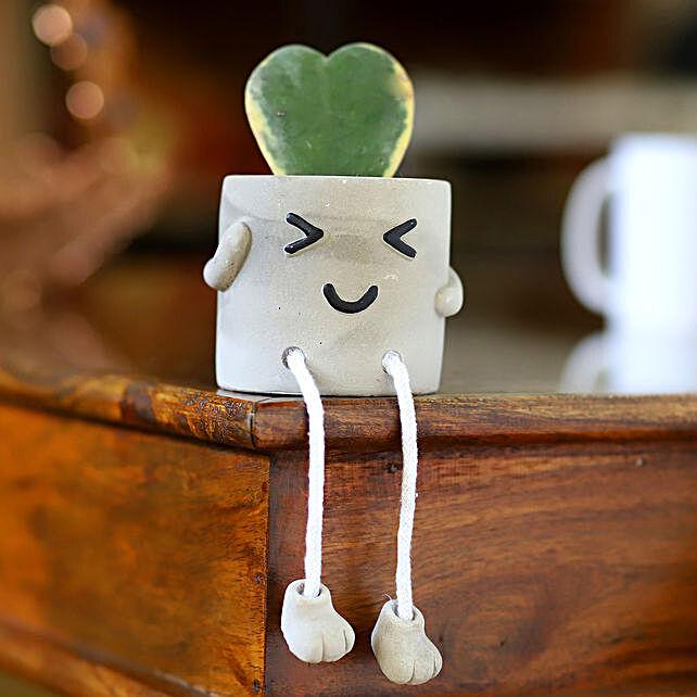 Hoya Plant In Grey Sitting Smiley Pot