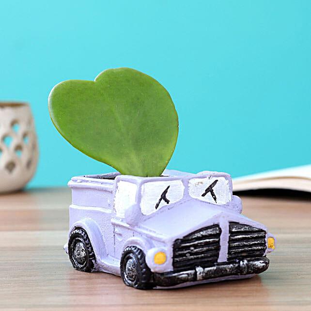 plant with car shape pot