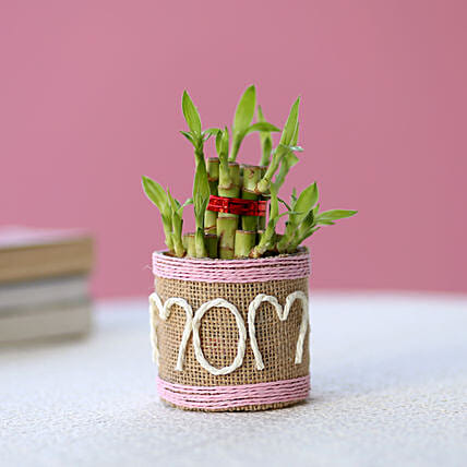 Lucky Bamboo for mom:Mothers Day Gifts Jaipur