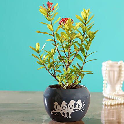Ixora Plant In Grey Printed Love Pot:Buy Flowering Plants