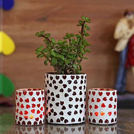 good luck plant with planter for home:Jade Plants