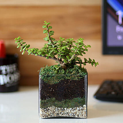 plant in glass vase