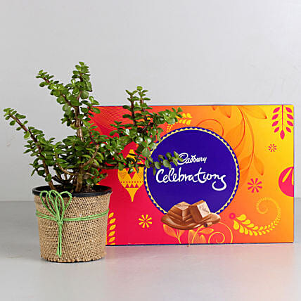 Plant and cadbury celebration Combo:Buy Plants Combos