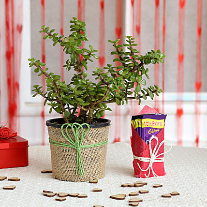 Jade Plant and Chocolate Combo  for valentine:Mothers Day Plant Combos