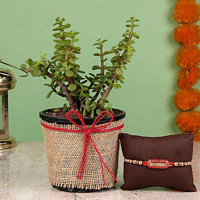 online Jade Plant & Capsule Rakhi