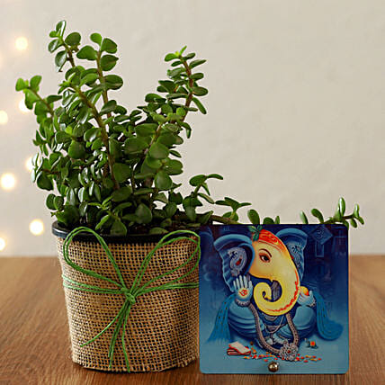 goodluck plant for diwali online:Send Home Decor Gifts