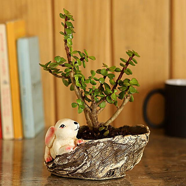 Jade Plant in Resin Pot