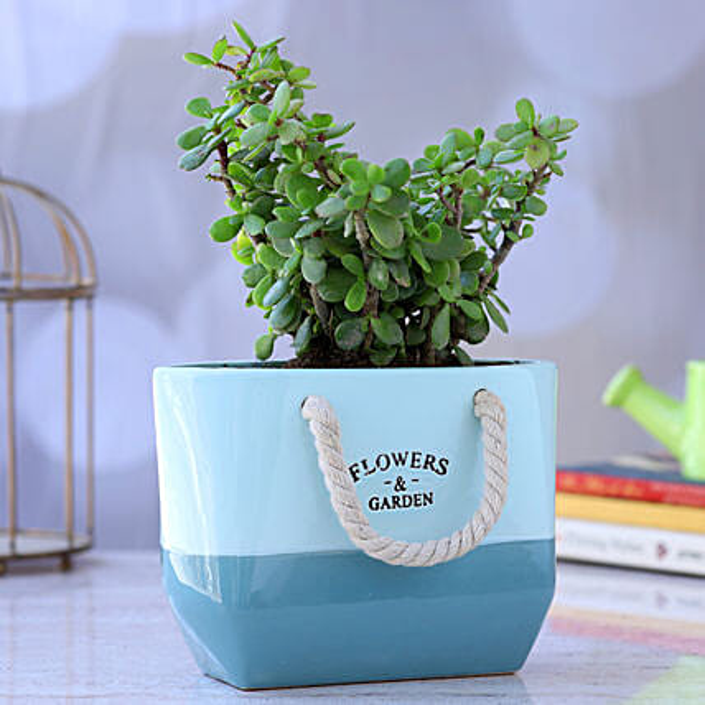 Jade Plant In Basket Ceramic Pot:Ceramic Planters