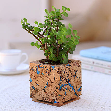 Plant in Beautiful Cork Planter:Cork Planters