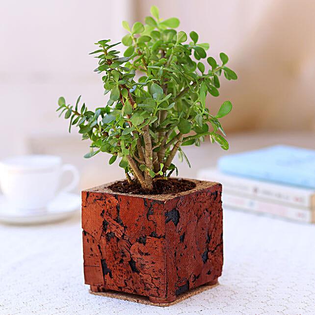 Designer Cork Planter with Jade Plant Online:Cork Planters