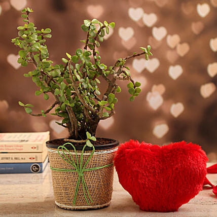 Jade Plant In Brown Jute Wrapped Pot & Red Heart