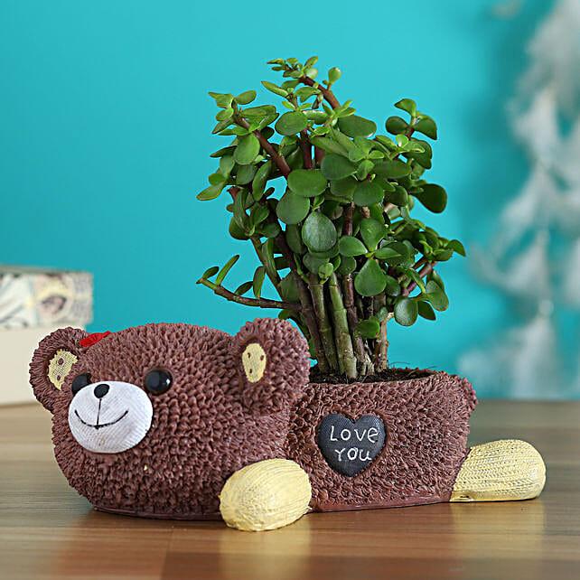 Jade Plant In Brown Love You Bear Ceramic Pot