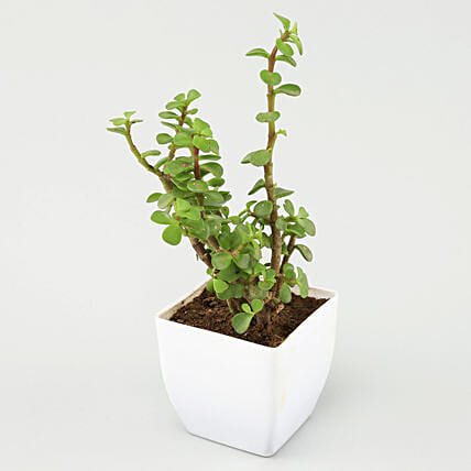 online plant in white planter