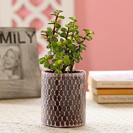 Decorative Pot Plant Online