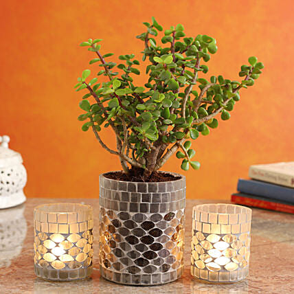 Jade Plant In Glass Mosaic Pot And Frosted Votive Set