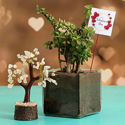 Jade Plant In Glass Vase With V Day Tag Wish Tree
