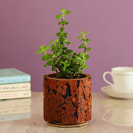 Plant In Cork Pot Online:Cork Planters
