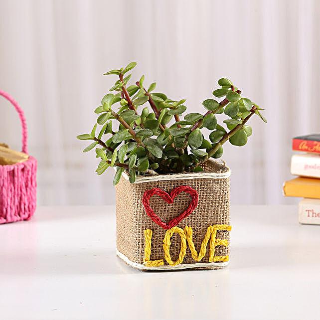 Love Pot Plant for Valentine