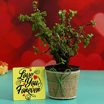 Jade Plant In Plastic Pot & Love You Forever Table Top Hand Delivery:Plant Combo For Valentines Day