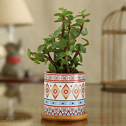 Jade Plant In White And Red Pot With Wooden Plate