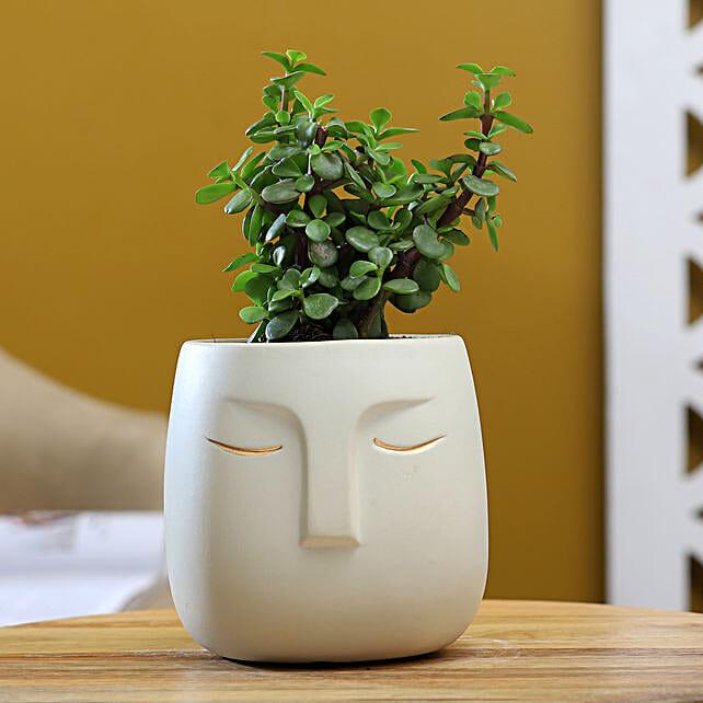 Jade Plant In White Ceramic Face Pot