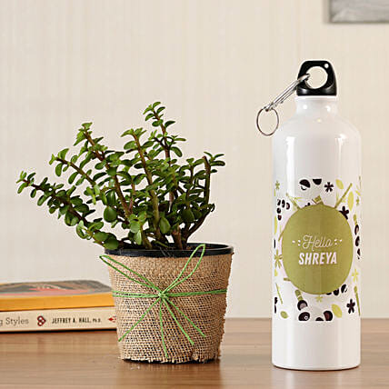 jade plant online with bottle
