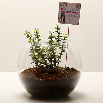 Online Jade Plant For Daughters Day:Daughters Day Plants