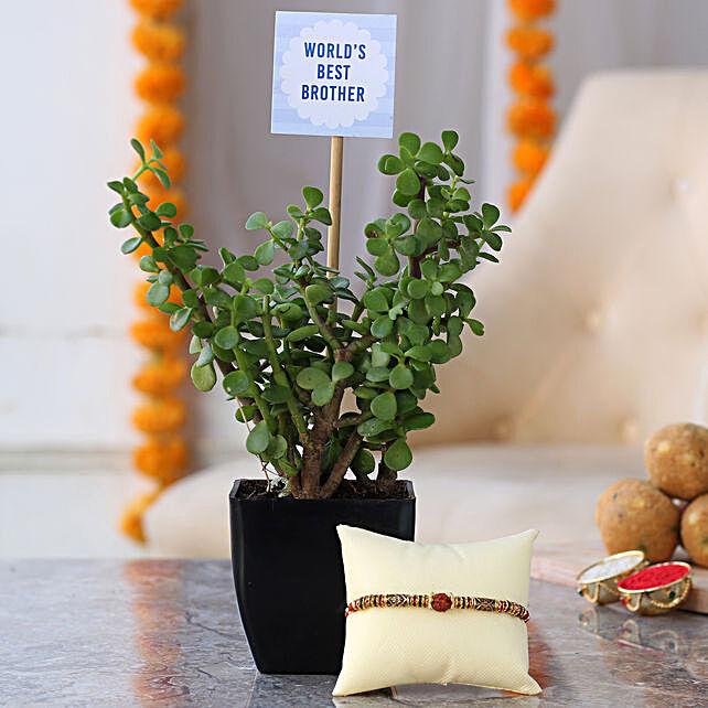 Jade Plant With Rudraksh Rakhi