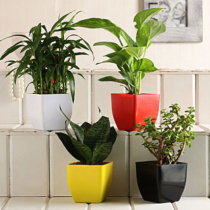 Send Online Plant Set