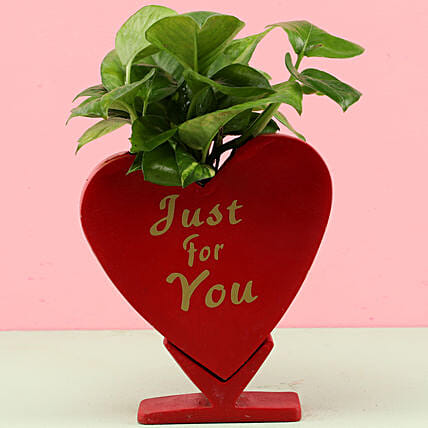 online money plant with heart shape pot:Fiber Planters