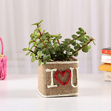 Love Pot Plant Gift for Him/Her