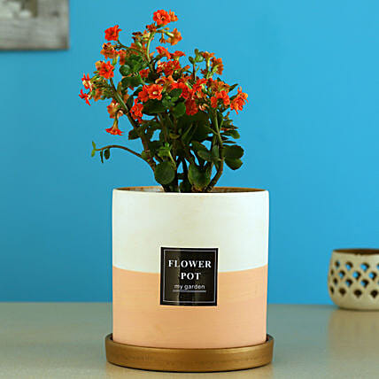 Kalanchoe Plant In Ceramic Pot With Golden Plate