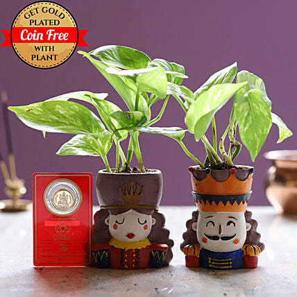 King Queen Money Plant Set & Free Gold Plated Coin
