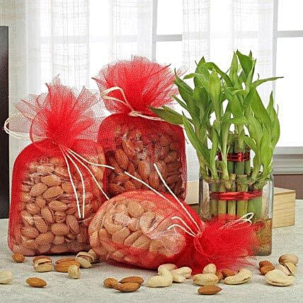 Combo of dry fruits and lucky bamboo:Send Gift Hampers for Family