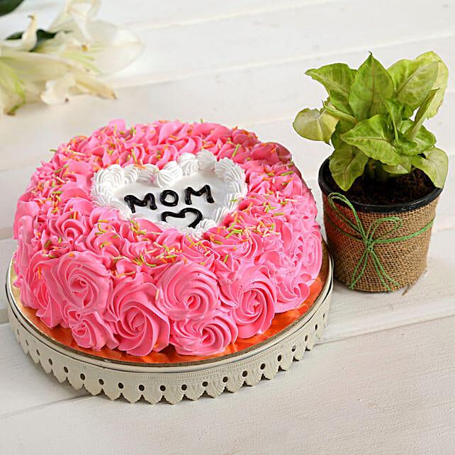 Love U Mom Cake Syngonium Plant Combo