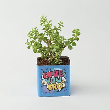 online plant in printed pot:Plants Under-499