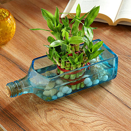 Lucky Bamboo Bombay Sapphire Bottle Planter:Bamboo Plants
