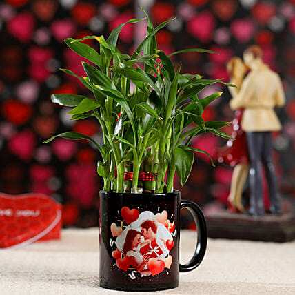 Buy Online Bamboo Plant For Valentines Day