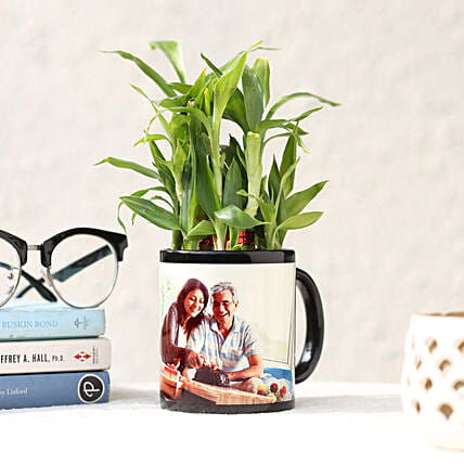 Personalised Lucky Bamboo In Black Mug:Send Plants For Fathers Day